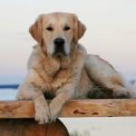 hundefotos
