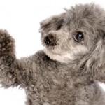 Teufelskralle_Hund
