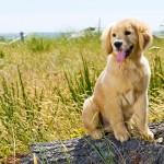 Sommer_Hund
