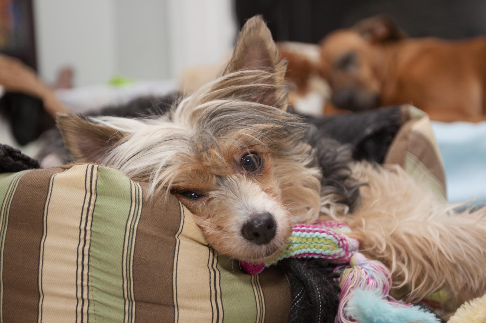 viskoelastisches Hundekissen