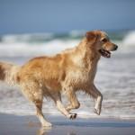 Hund und Sommertage
