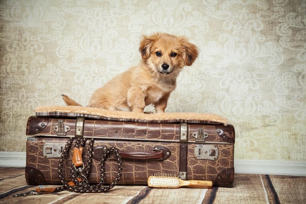 Urlaub_mit_Hund