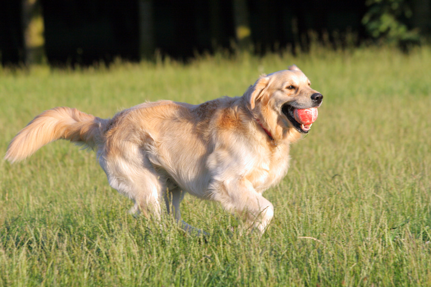 Spot_on_Hunde