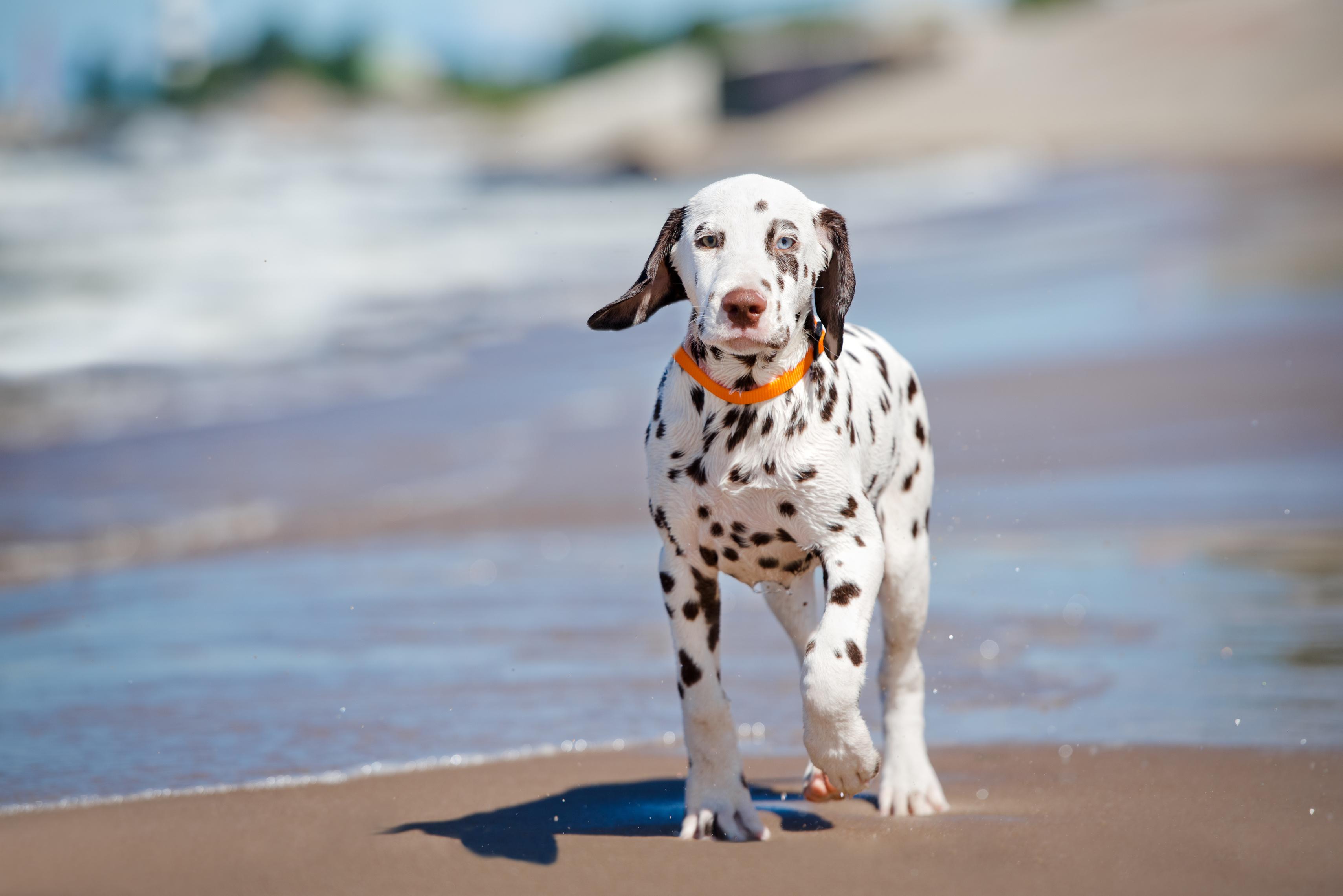 Erstausstattung für den Hund