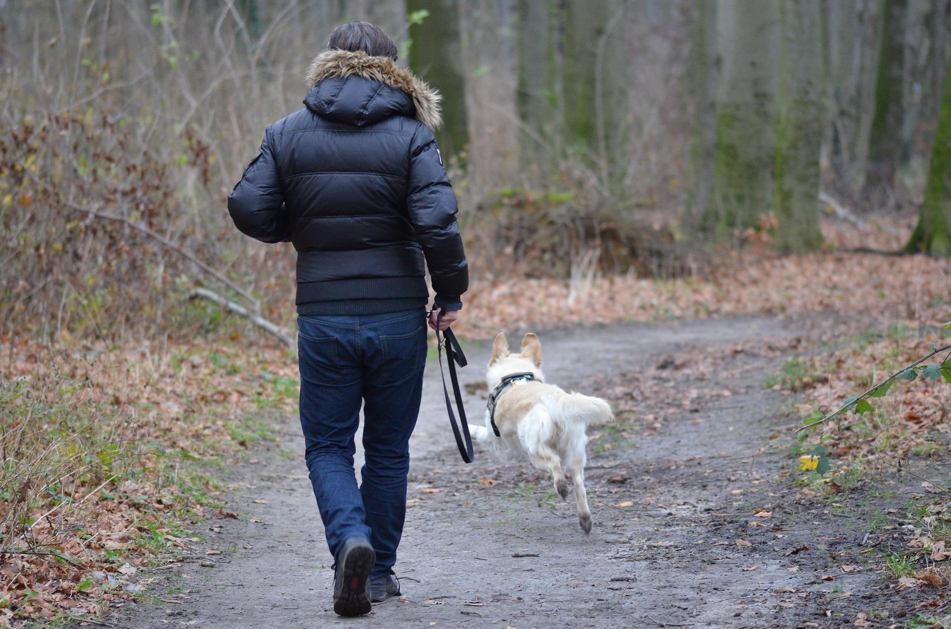 Jagdtrieb bei meinem Hund