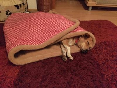Lissy im Hundeschladsack Bavaria