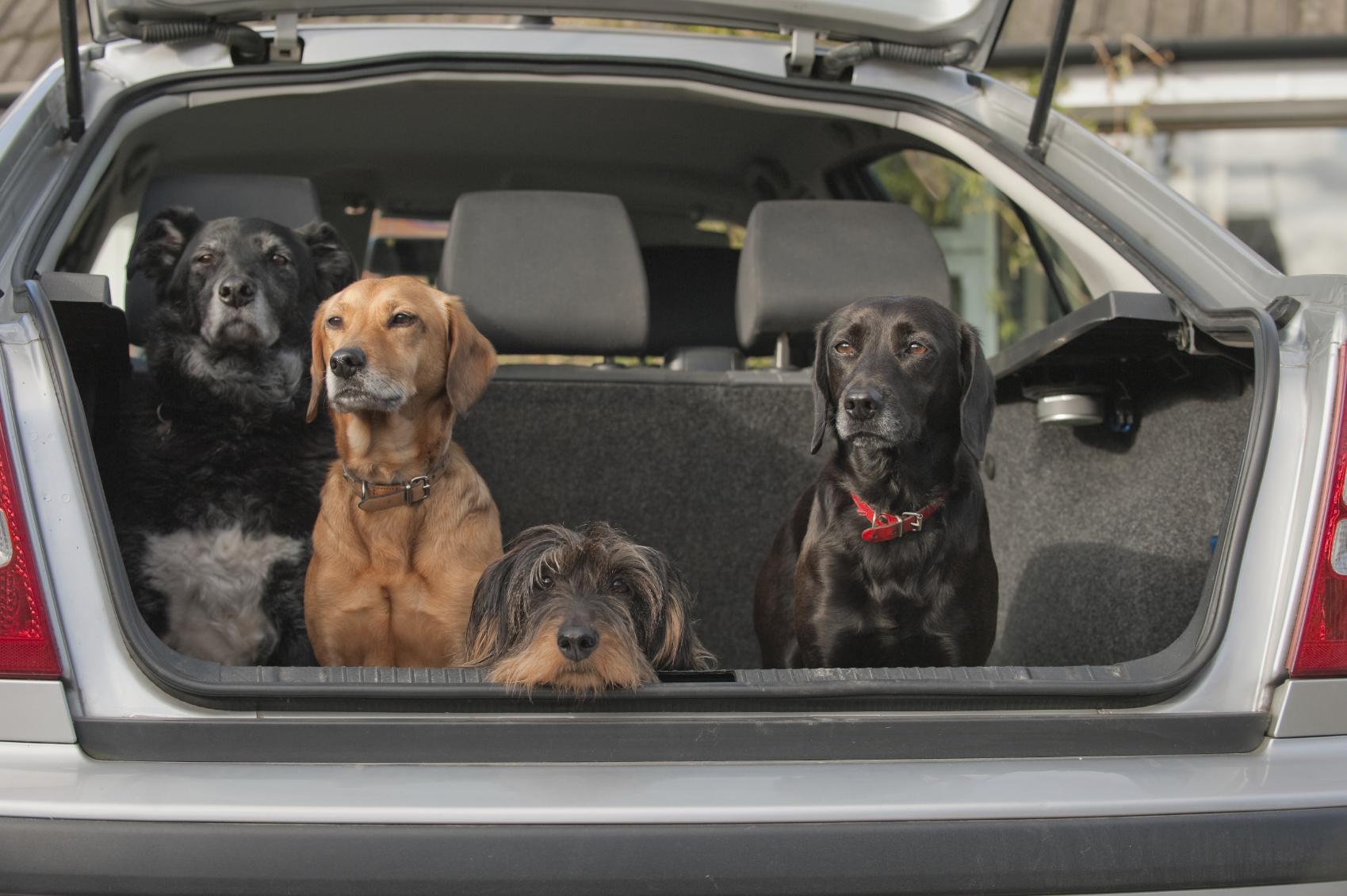 reisedecke_hund