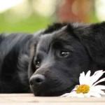 Hund_im_Fruehling