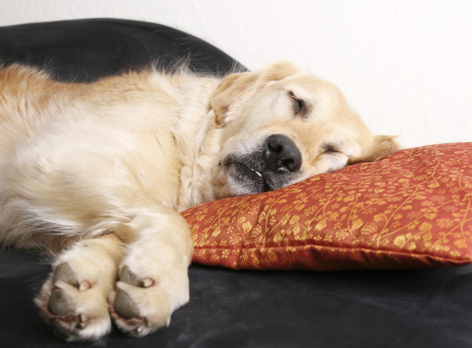 Hund_auf_Kissen, Aufwärmtraining für Hunde