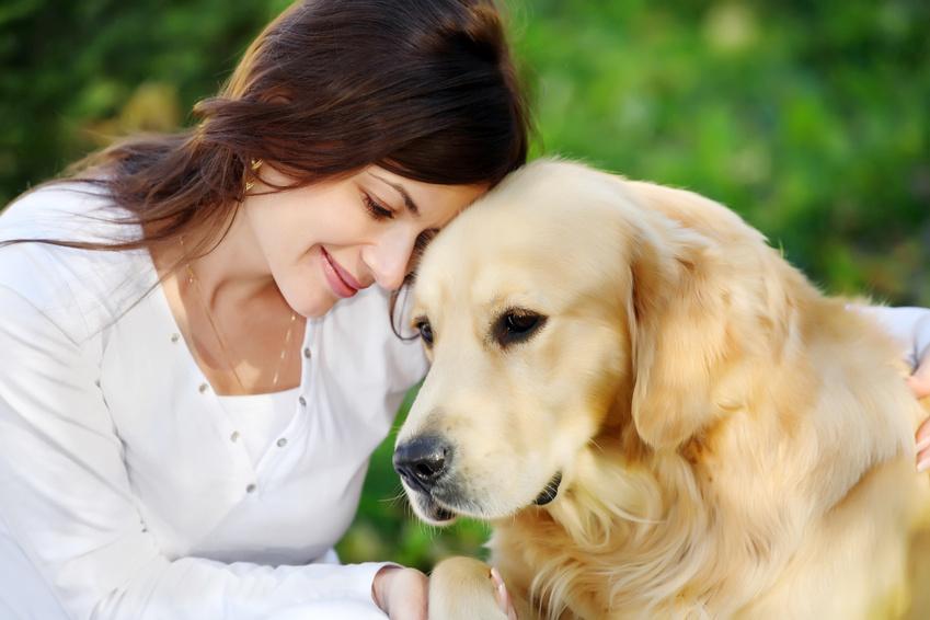 Hunde-Wellness