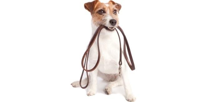 Spaziergänge mit Hund