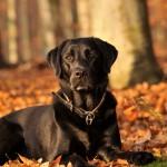 Herbst mit dem Hund genießen