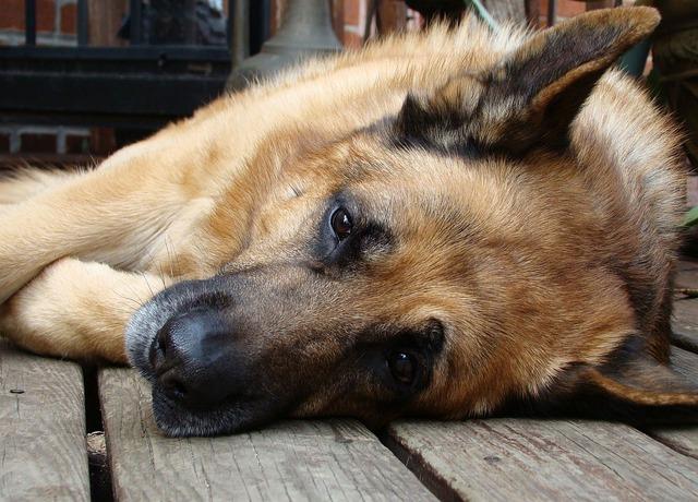 Hausmittel gegen Juckreiz beim Hund