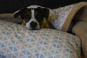Bruno und der Kopfkissen für müde Hundeköpfe Trinity