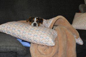 Bruno im Hundeschlafsack und Hundekopfkissen Trinity
