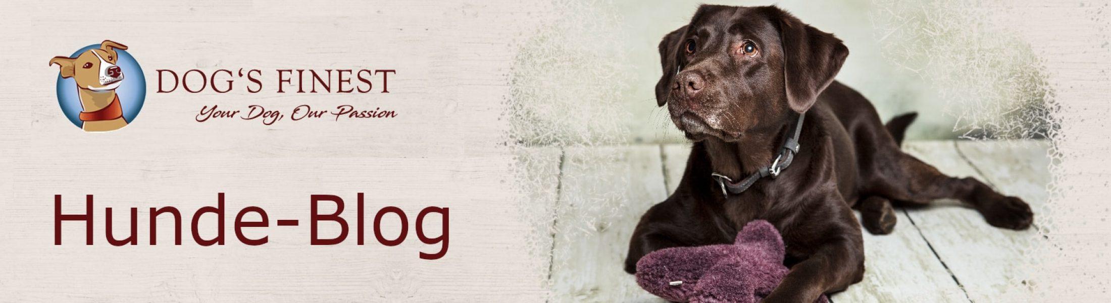 Hunde-Blog