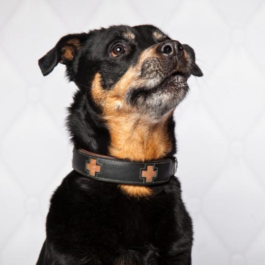 Hundehalsband Cross schwarz