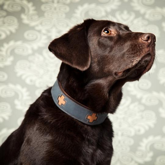 Hundehalsband Cross blau