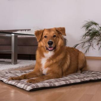 Hundedecke Cookie (rutschfest)