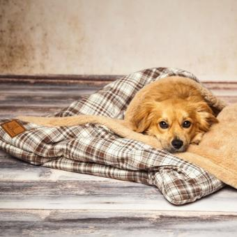 Hundeschlafsack Cookie