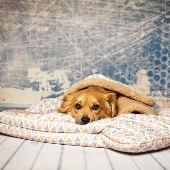 Hundeschlafsack Trinity