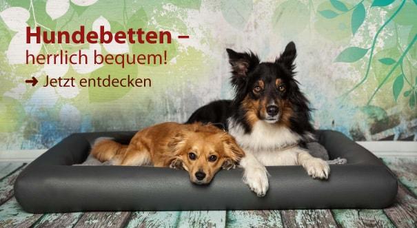 Banner Hundebetten